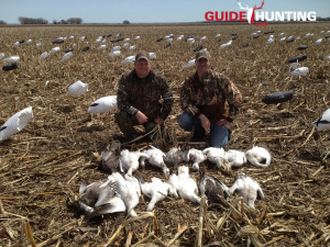 Snow Goose Hunting Guide Picture